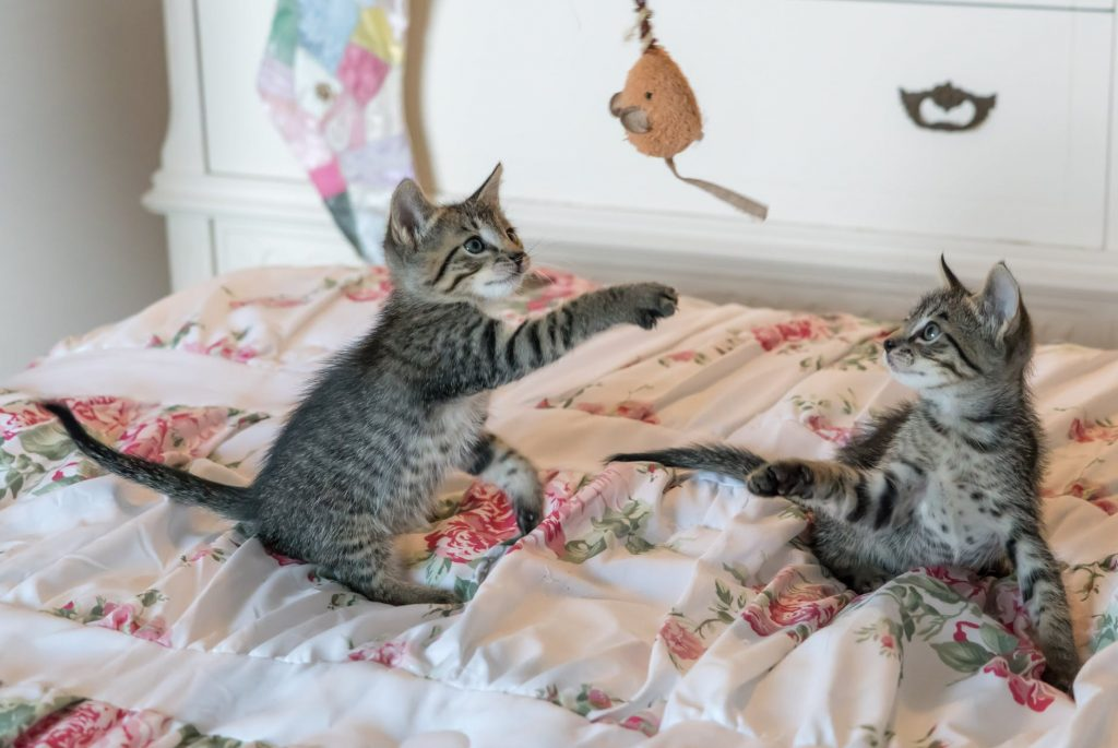 εκπίδευση γάτα