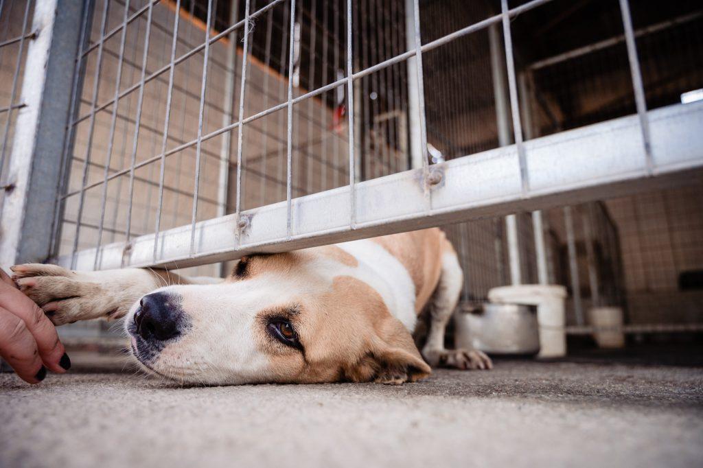 φιλοξενία αδέσποτων σκύλων
