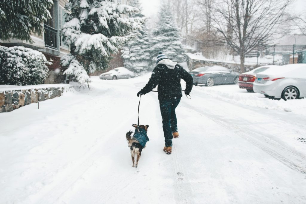 σκύλος χειμώνας