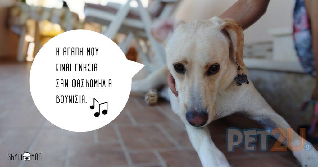 αγάπη σκύλων