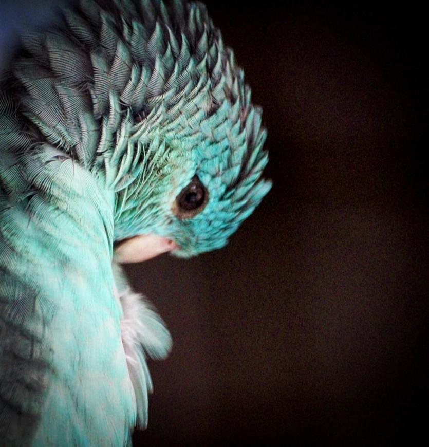 κατάθλιψη πτηνών