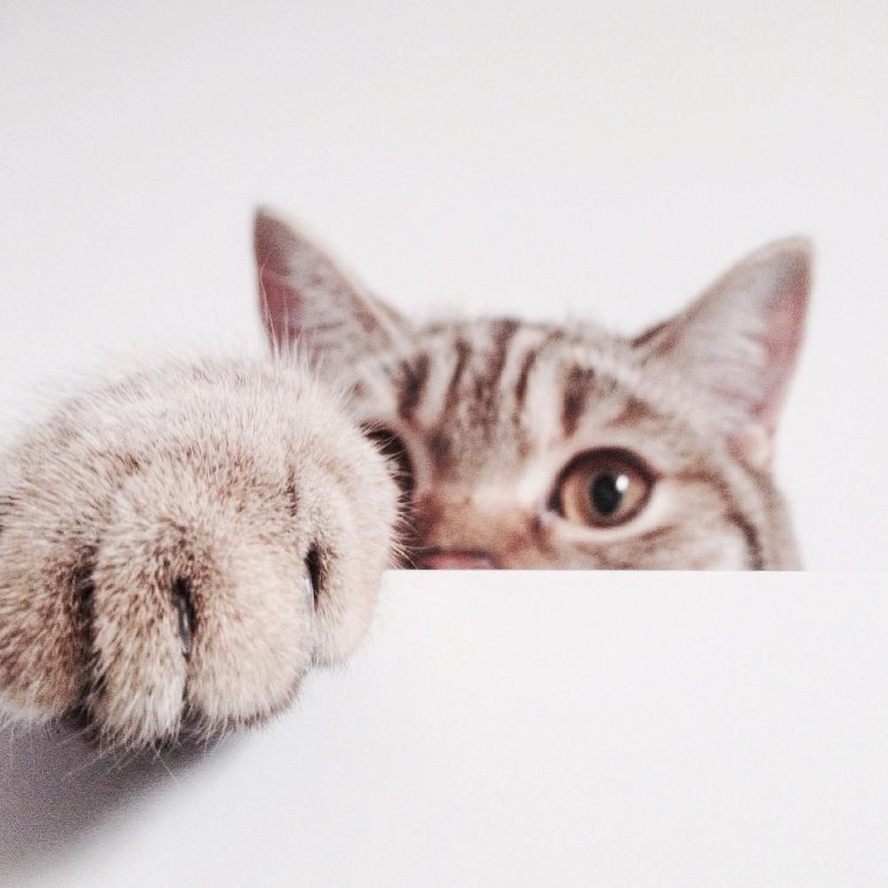 γατα συνηθειες