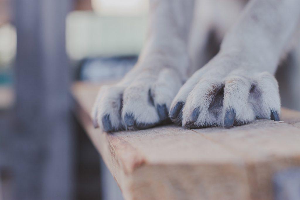 σκύλος νύχια