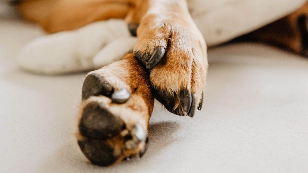 Νυχια σκύλου